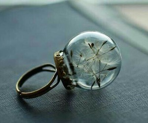 dandelion, wishes, and ring image
