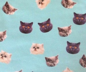 cat, wallpaper, and blue image