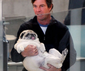Dennis Quaid, dog, and fat image