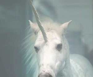 unicorn, white, and grunge image