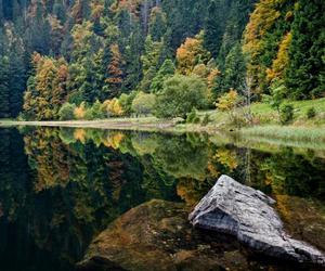 forest, green, and lake image