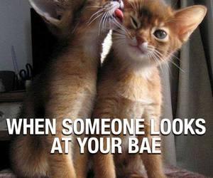 bae, cat, and cute image