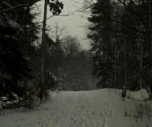 grunge, nature, and snow image