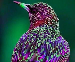 bird, free, and wild image