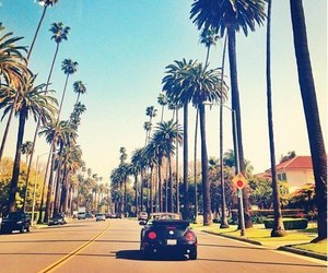 palms, summer, and town image