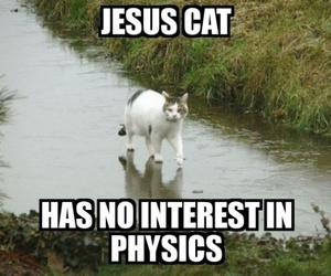 cat, funny, and jesus image
