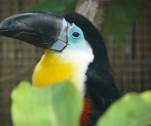 couleurs, oiseau, and beauval image