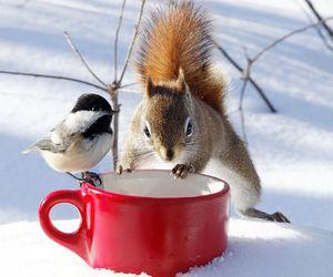 bird, snow, and squirrel image