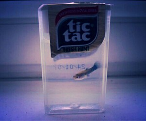 fish, tic tac, and grunge image