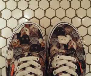 cats shoes vans aspca image