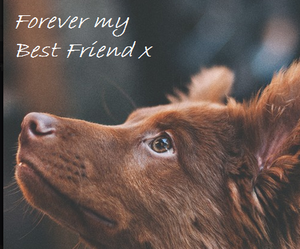 animal, animals, and best friend image