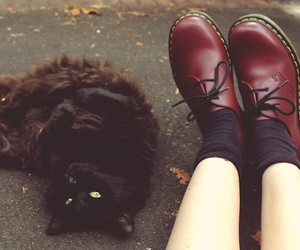 cat, shoes, and vintage image