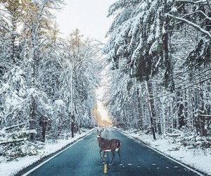 winter, deer, and snow image