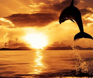 sunset, beautiful, and dolphin image
