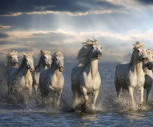 horses and nice image