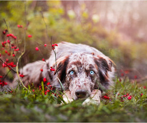 dog, eyes, and photography image