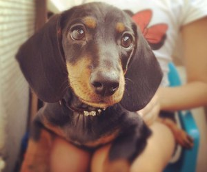 animal, mimimi, and dog image