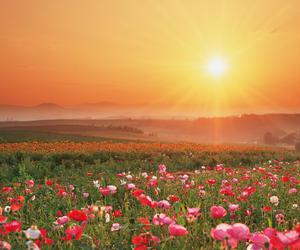 flowers, sun, and field image