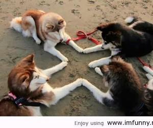 animals dogs image