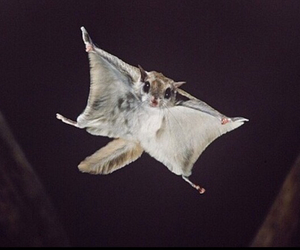 animal, beautiful, and fly image