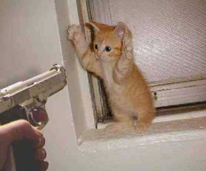 cat, gun, and funny image