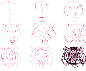 tiger and how to draw image
