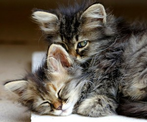 animals, kittens, and love image
