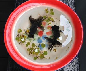 fish and yin yang image