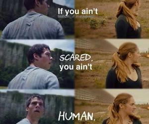 divergent, thomas, and the maze runner image