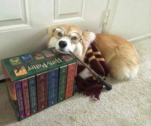 harry potter, dog, and book image