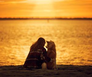 dog, beach, and photography image