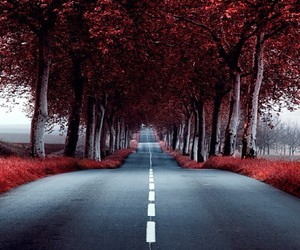 nature, place, and road image