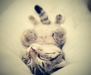 cat, sleeping, and sweet image