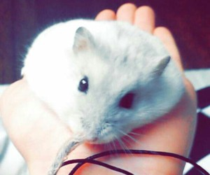 funny, hamster, and pet image
