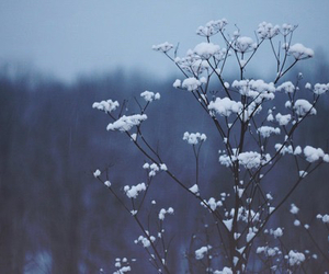 cold, flower, and winter image