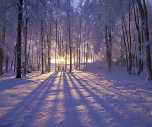 cold, winter, and frosty image