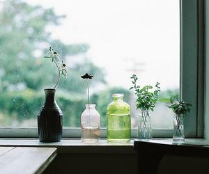 beautiful, plant, and window image
