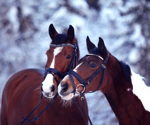 horses, animal, and brown image