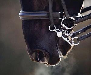 horse, black, and animal image