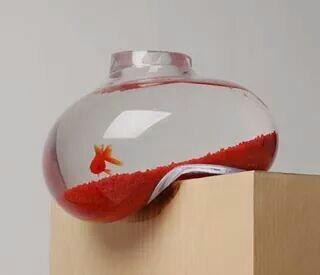 fish, design, and aquarium image
