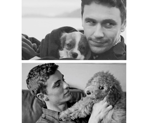 blackandwhite, brothers, and puppies image