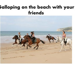 beach, breeze, and equine image
