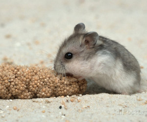 feed, food, and hamster image