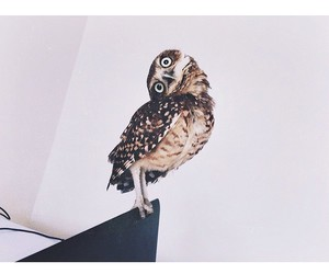 owl and instagram image