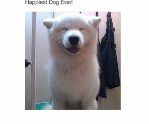 dog, happy, and cute image