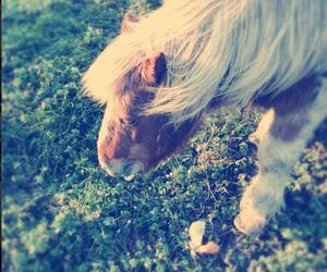 horse, mini, and cute image