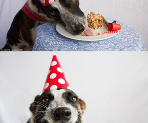 dog, birthday, and cake image