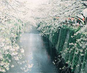 flowers, japan, and water image