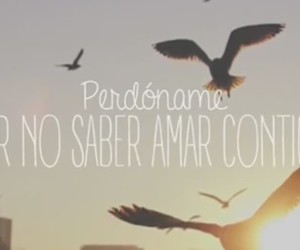 frase, perdon, and sorry image