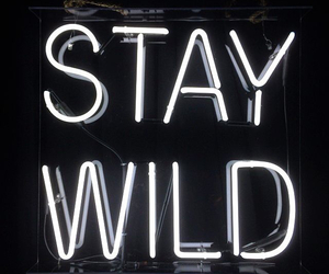 tumblr and stay wild image